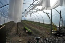 La serre du haut se peuple progressivement... Vivement l'installation du système d'irrigation!