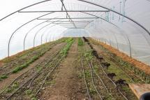 Les pousses ayant affronté l'hiver: épinards, pourpier, cerfeuil, poireaux, chou Kale...
