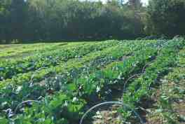 L'automne sera BON... de légumes !