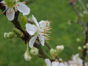 printemps!