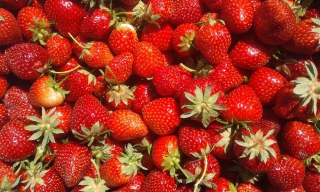 photos 20180529 fraises