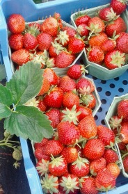 photos 20180602 fraises